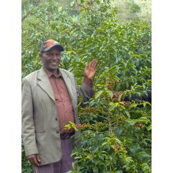 Café d'Ethiopie - Guji - Bishan Fugu - UW Grade 1,Bio